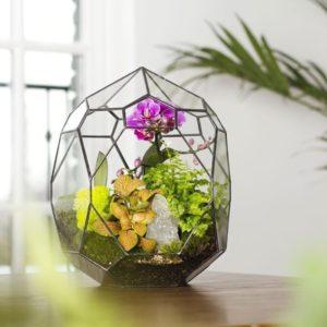 Флорариум круглый с орхидеей, зеленью и стабилизированным мхом
