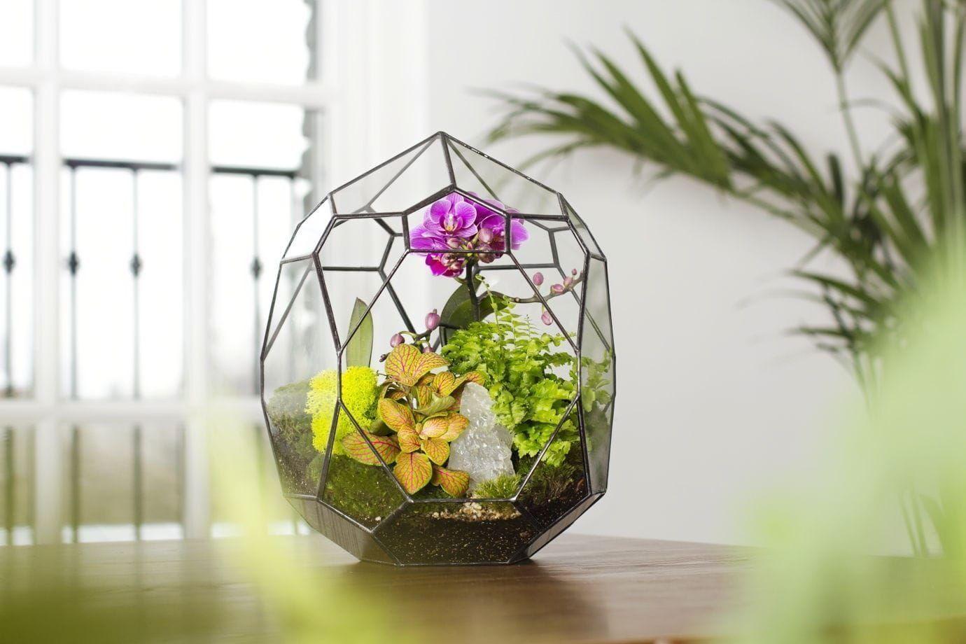 Флорариум с орхидеей, зеленью и стабилизированным мхом