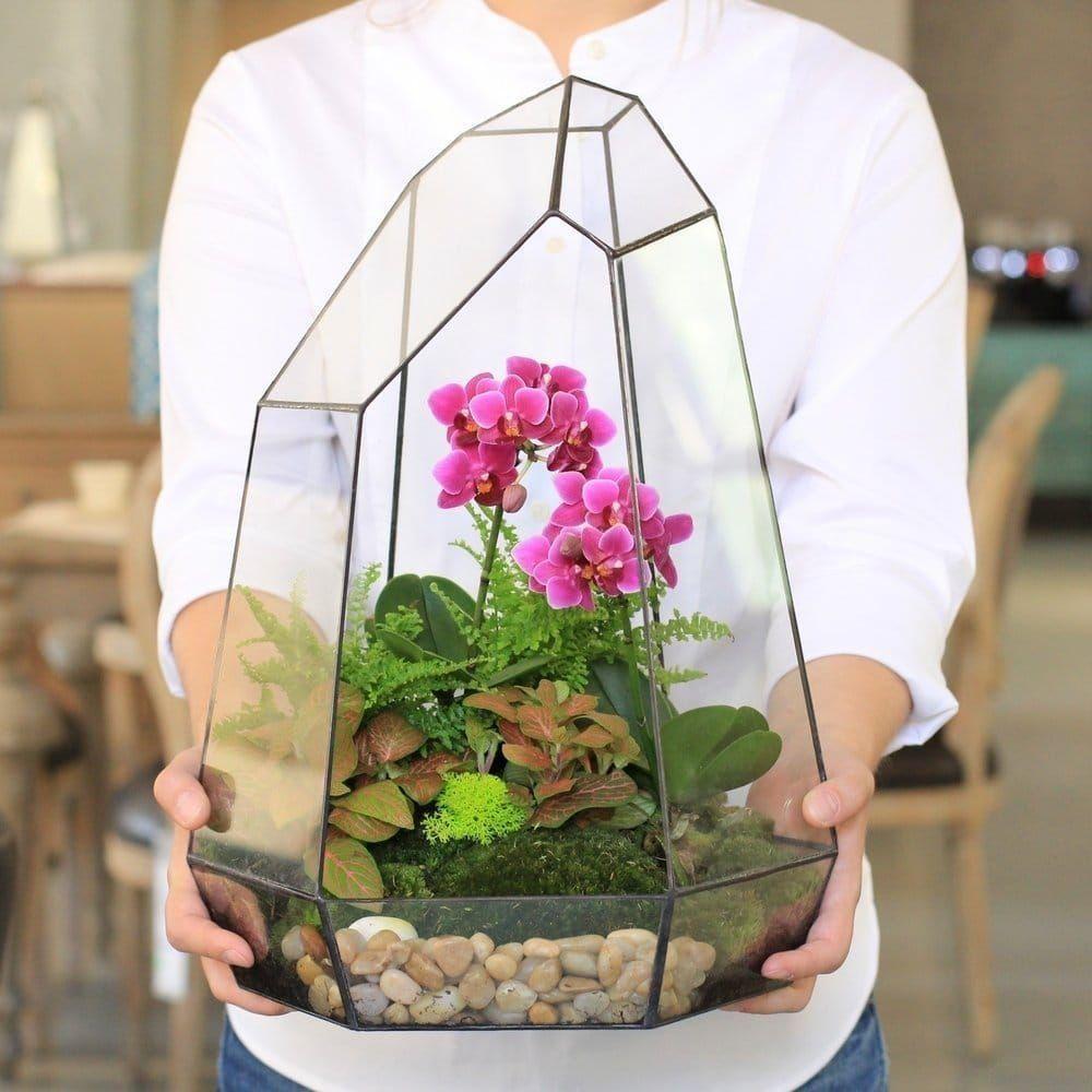 Флорариум с мини орхидеей, фиттонией и папоротником