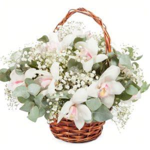 Корзина 13 белых орхидей (Premium) с эвкалиптом