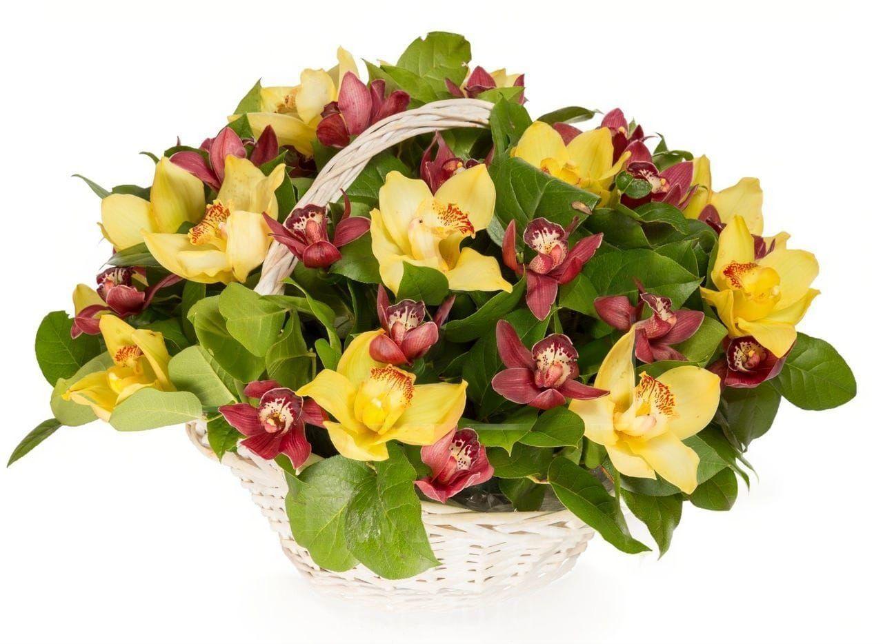 Корзина 25 орхидей с зеленью