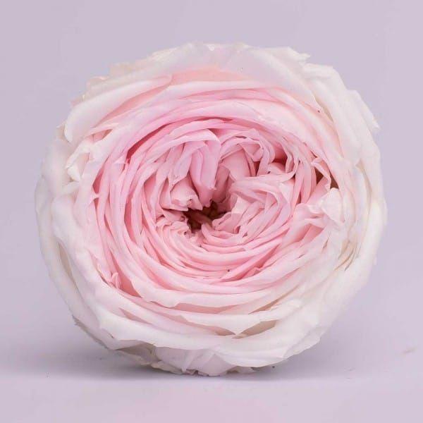 Свадебные, цветы розы купить в спб оптом