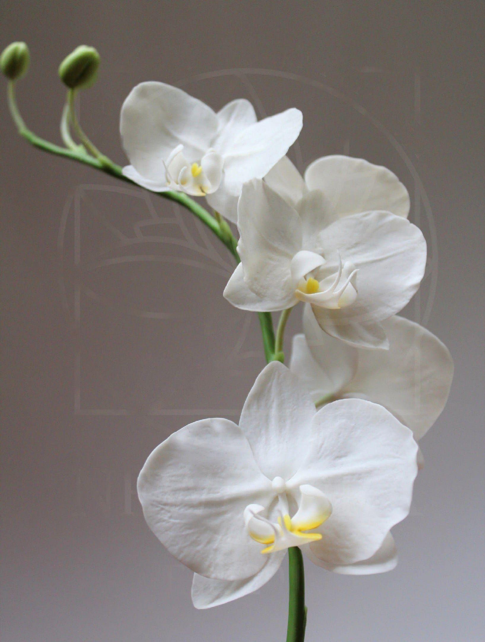 Орхидея керамическая из полимерной глины (колокольчик)