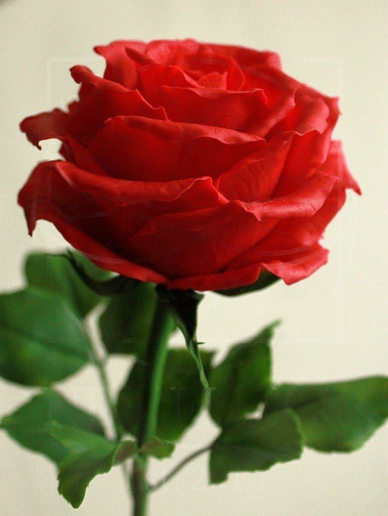Розы керамические красные из полимерной глины
