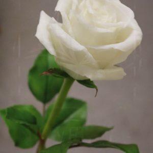 Розы керамические белые из полимерной глины
