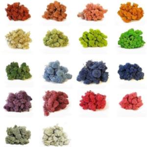 Стабилизированный цветной мох ягель
