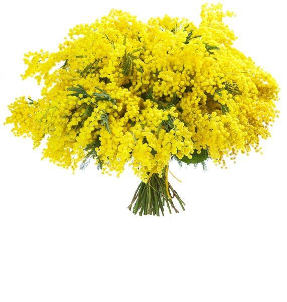 Цветы мимозы букеты из мимоз, вкусом хабаровск