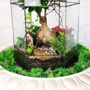 Флорариум вытянутый с фикусом и керамическим домиком 40×20см