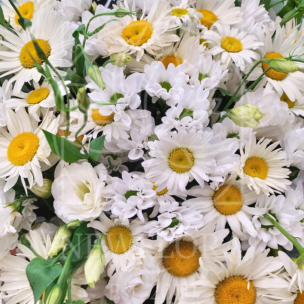 Ромашки букет цветов фото