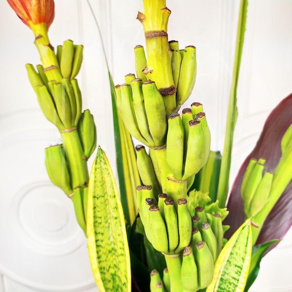 Букет 3 цветка банана (Musa) с тропической зеленью