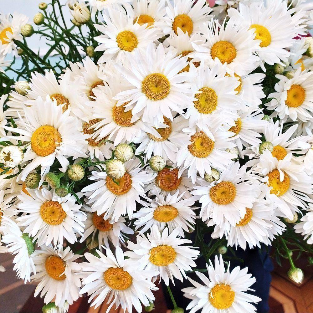 Ромашки букет цветов картинки с днем рождения