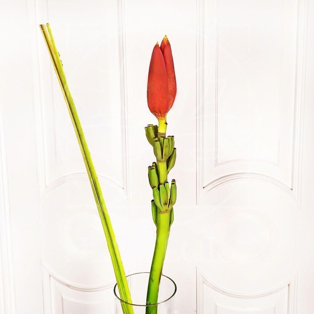 Цветок банана красный поштучно (Musa flower)