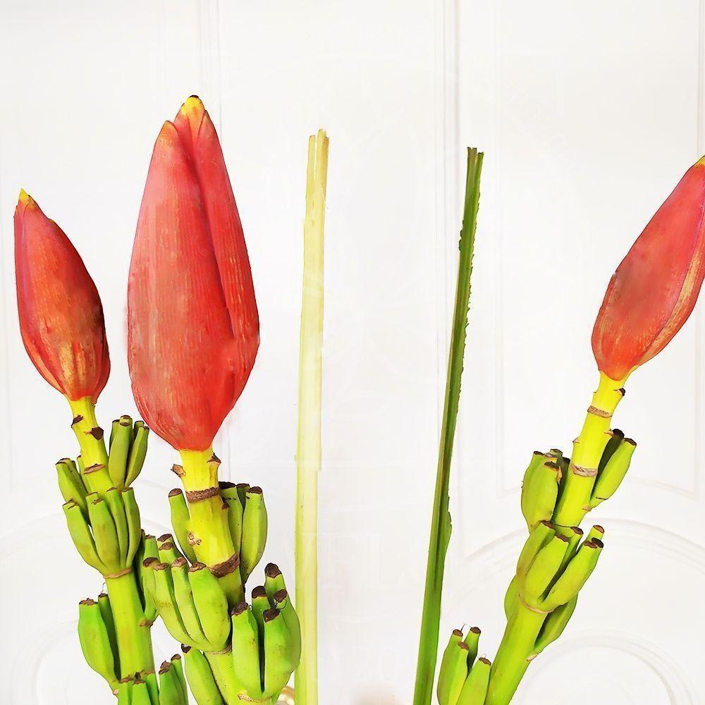 Цветок банана 3шт (Musa)