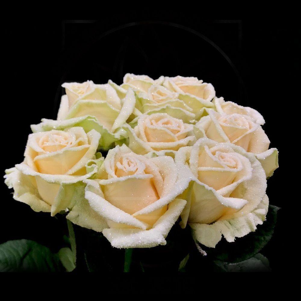 Сахарные розы сорт Frost Avalanche Peach