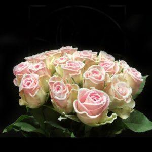 Сахарные розы сорт Frost Lovely Jewel