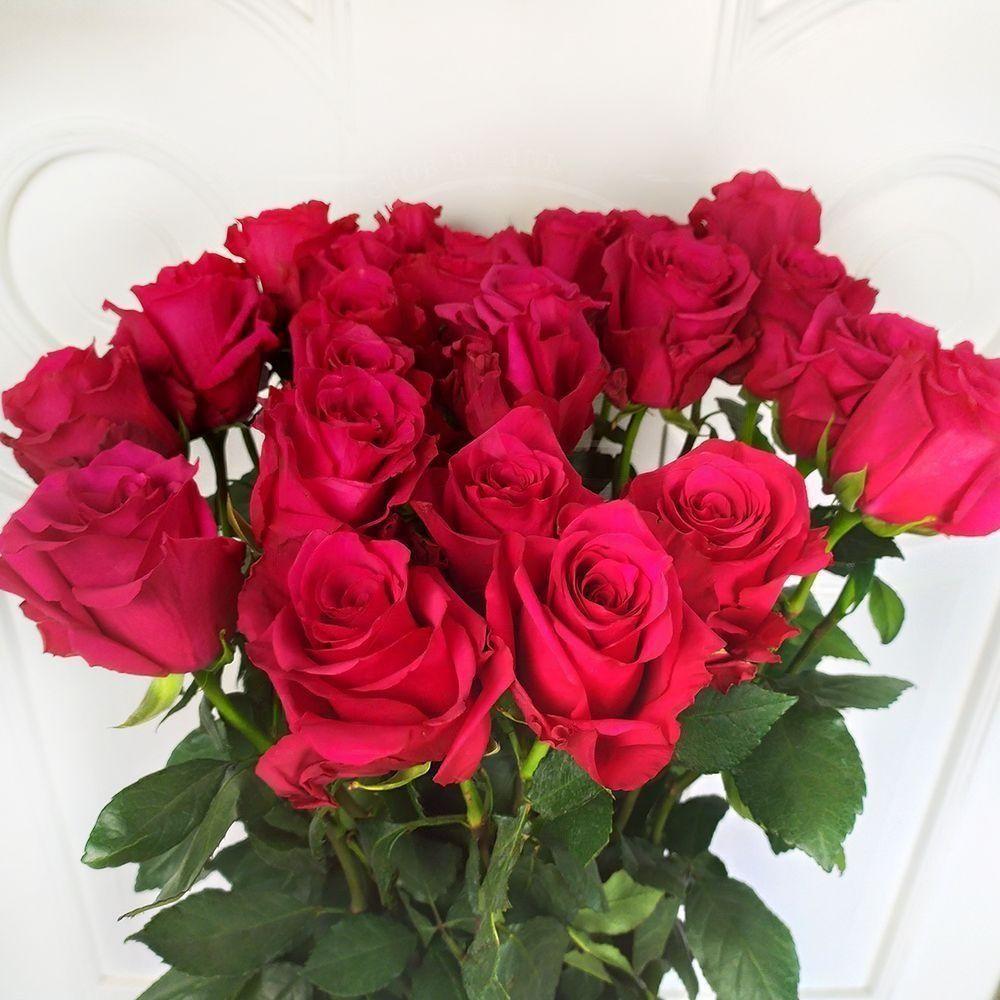 Букет 25 ярко розовых роз высотой 110см