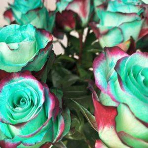 Букет 25 бирюзовых роз (new sweetness)