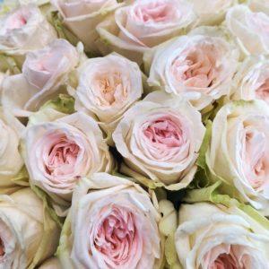 Букет 51 пионовидная ароматная роза Вайт Охара (White Ohara)