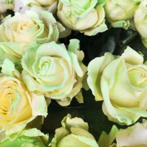 Натуральные белые розы, светящиеся в темноте