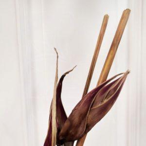 Геликония сухая 70-80см