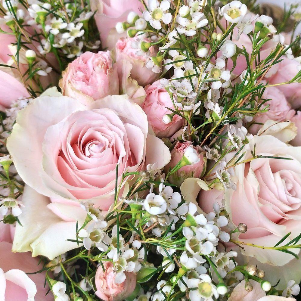 Букет 25 розовых роз с ваксфлауэр (хамелациум)