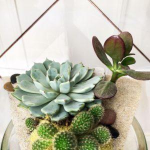 Флорариум с кактусом и суккулентами