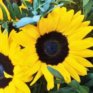 Корзина цветов 51 подсолнух с фисташкой