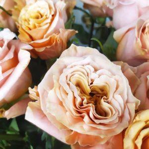 Розы пионовидные Shimmer (поштучно)