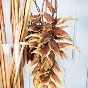 Геликония рострата «rostrata» сухая
