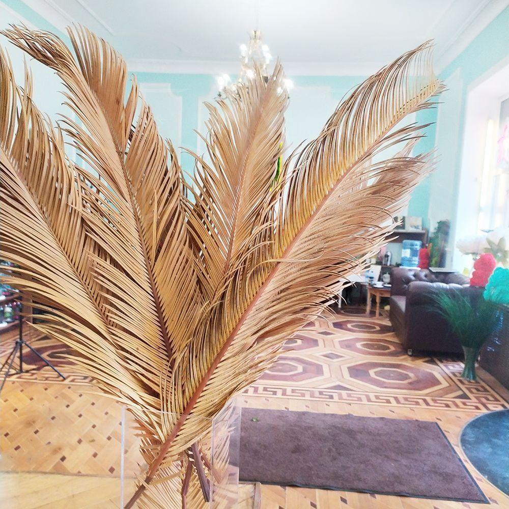 Ветка пальмы «цикас» сухая