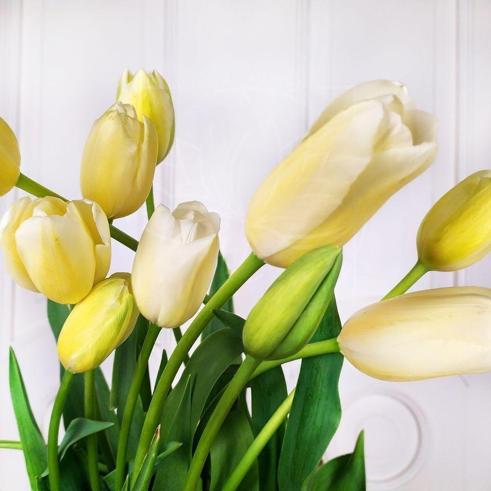 Французский тюльпан-гигант высотой 70-80см поштучно (Premium)