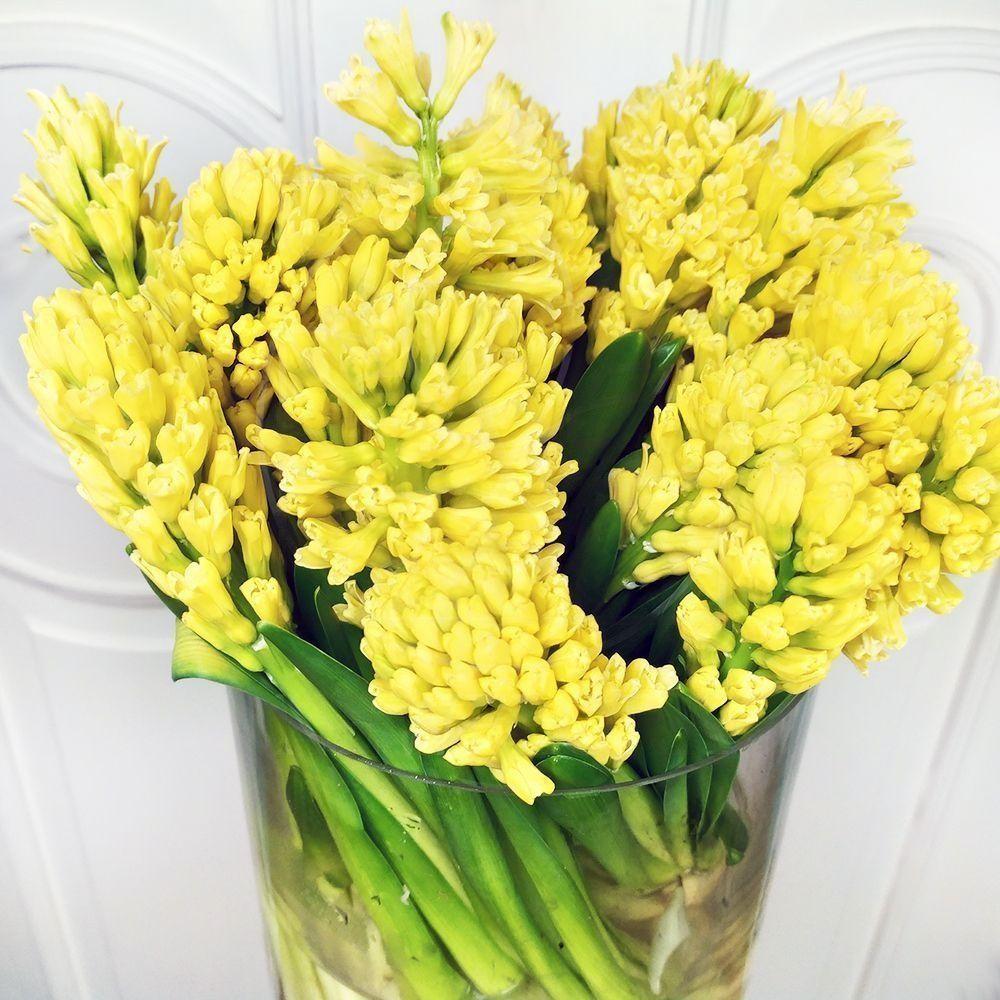Букет 25 желтых гиацинтов в вазе