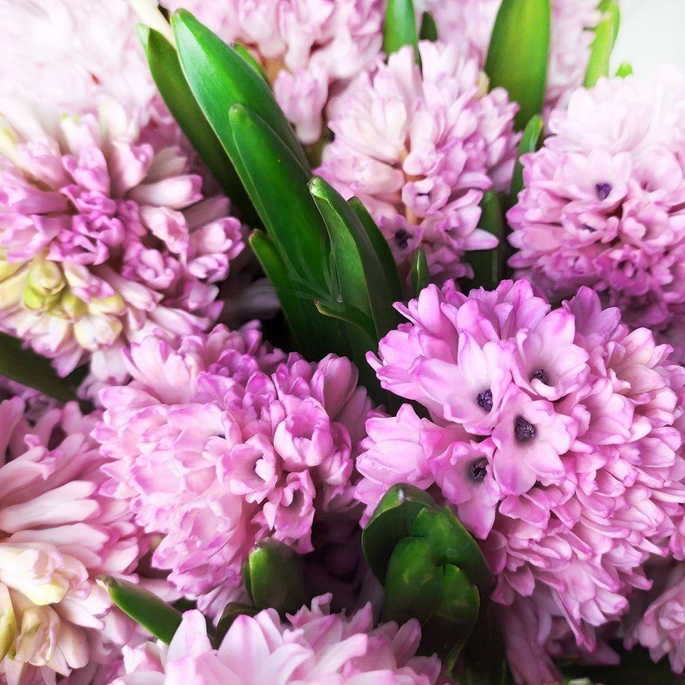 Букет 25 розовых гиацинтов в вазе