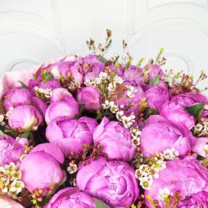 Букет 35 ярко-розовых пионов с ваксфлауэр (хамелациум)
