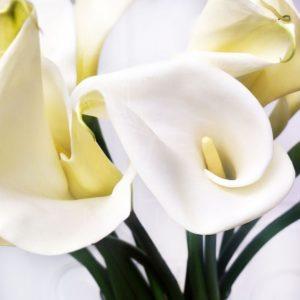 Каллы метровые белые 100см (поштучно)