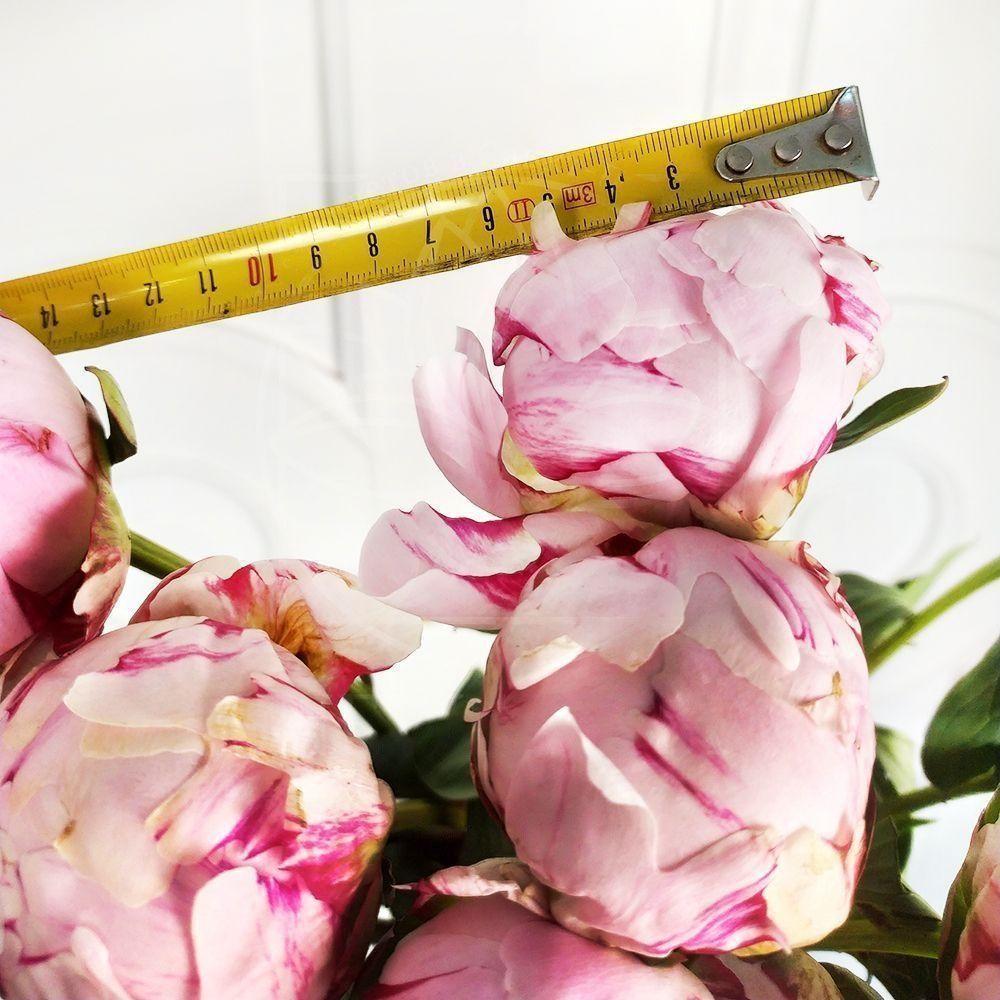 Букет 9 маленьких розовых пионов в крафт бумаге