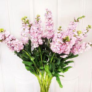 Букет 15 веток розовой маттиолы (110см)