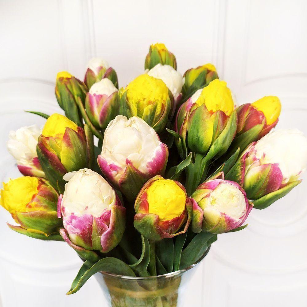 Букет 19 пионовидных тюльпанов «Ice Cream»