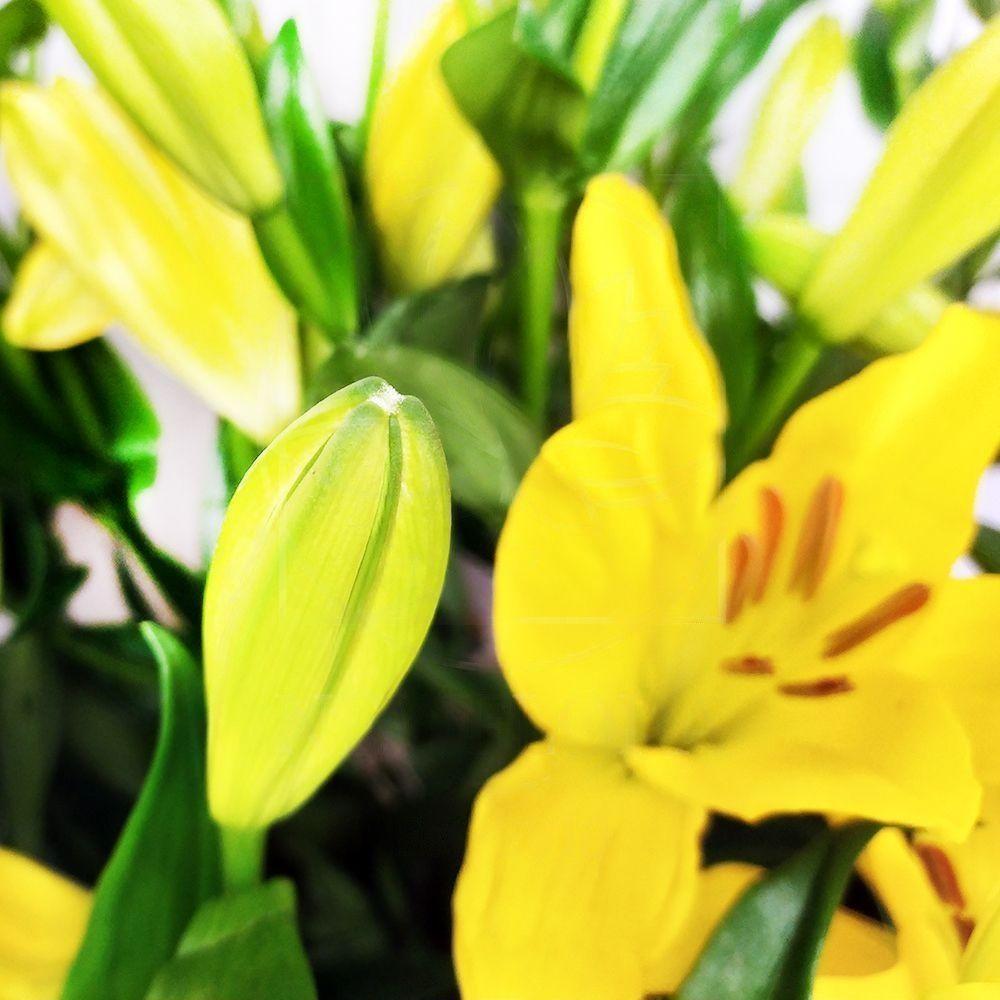 Букет 19 желтых лилий Nashville (100см)