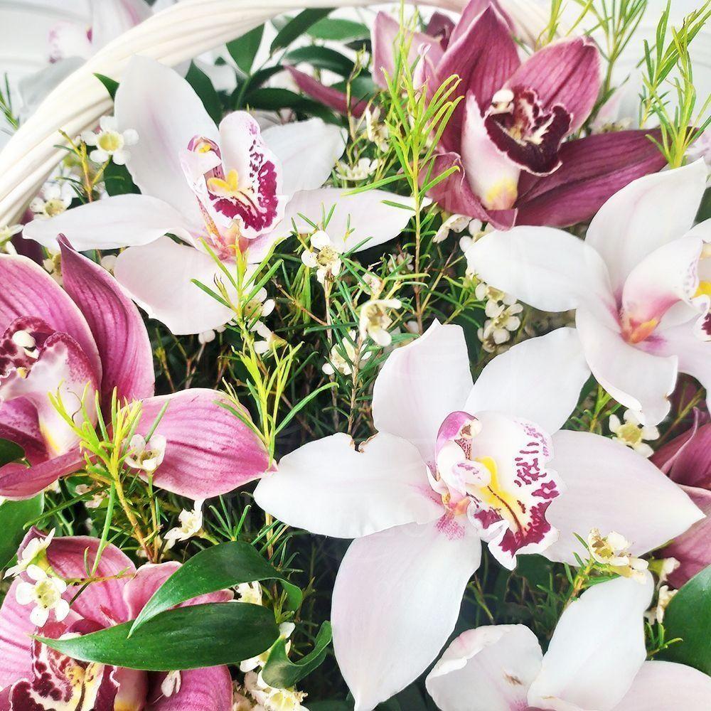 Корзина 25 орхидей с рускусом и ваксфлауэр (хамелациум)