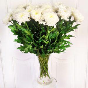 Букет 25 белых хризантем (Einstein)