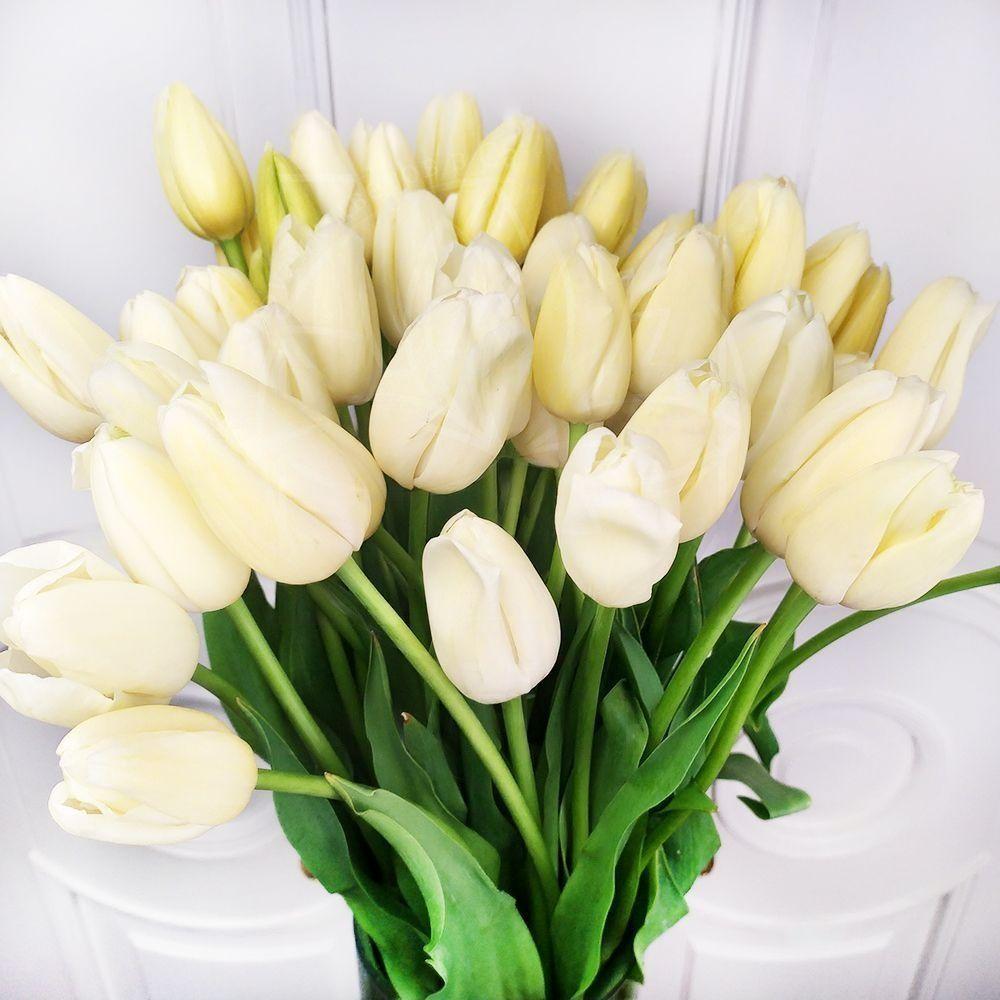 Букет 51 высокий белый тюльпан Maureen 65-75см