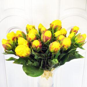 Тюльпаны желтые «Ice Cream» (поштучно)