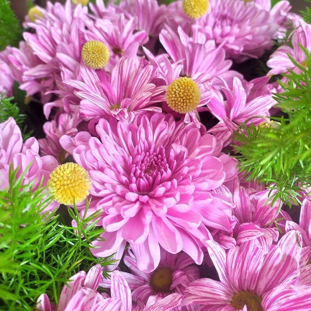 Корзина цветов с хризантемами, краспедией и рускусом (60×35см)