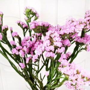 Статица розовая (поштучно)