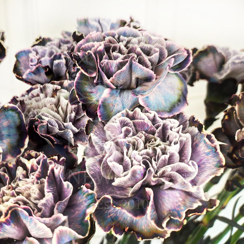 Гвоздика Violetta (поштучно)