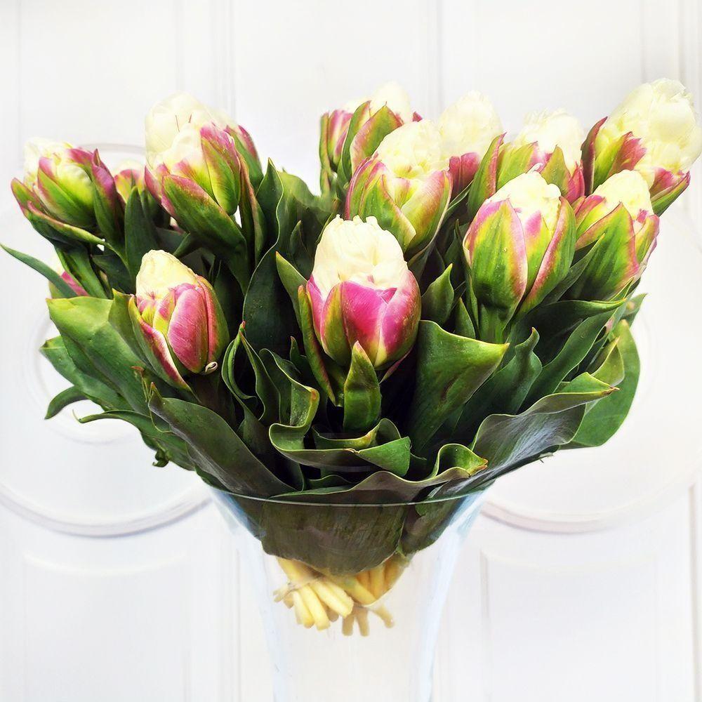 Тюльпаны белые «Ice Cream» (поштучно)