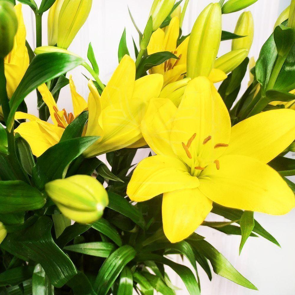 Букет 9 желтых лилий Nashville (100см)
