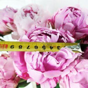 Букет 11 отборных розовых пионов