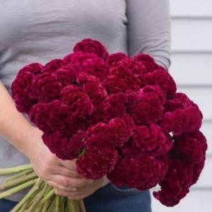 Букет 25 темно-розовых целозий